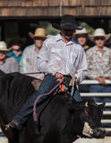 Cattle Rider stock images