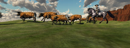Cattle Roundup. A cowboy drives a herd of cattle back to the ranch Royalty Free Stock Photography