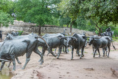 Cattle sculpture in Dallas Royalty Free Stock Photo