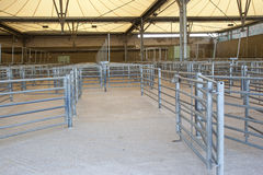 Cattle Shed Stock Photos