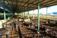 Cattle shelter Royalty Free Stock Image