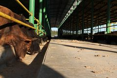 Cattle shelter Stock Images