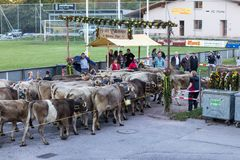 Cattle Show in Switzerland stock photography