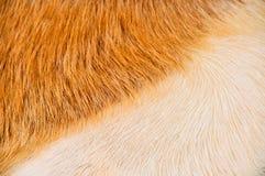 Cattle skin. A brown bovine skin tissue Stock Photography