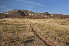 Cattle trail in Colorado mountain valley stock photography