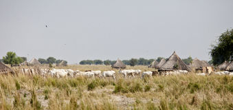 Cattle and village in South Sudan Stock Images
