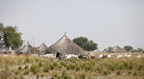 Cattle and villagers, South Sudan Stock Photos