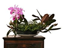 Light purple orchids arranged on its vase royalty free stock photos