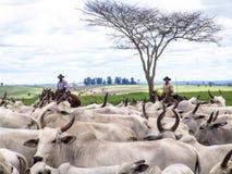 cattleman obraz stock