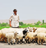 Cattleman. And his sheeps on the road stock photo