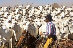 cattleman Zdjęcia Stock