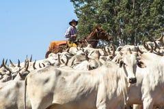 Cattleman gromadzić się obrazy royalty free
