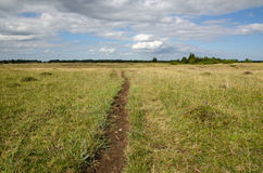 Cattles path in a pasture land Stock Photo
