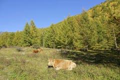 Autumnal mountain scenery Stock Photo