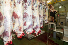 Cattles On Vertical Rails In A Slaughterhouse. Cattle Carcasses On Vertical Rails In A Slaughterhouse stock photo