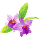 Cattleya - birth flower vector illustration in watercolor paint. Birth flower vector illustration in watercolor paint textures Royalty Free Stock Photos