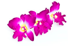 Cattleya orchid  made of fabric. Stock Images