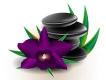 Cattleya-Orchideenhintergrund Lizenzfreies Stockfoto