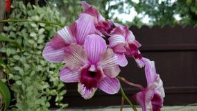 Cattleya orkidéblomma med ormbunkeblommaväxten Arkivfoton