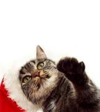 Cattura del gatto Fotografie Stock Libere da Diritti