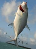 Cattura di pesci #1 Fotografia Stock