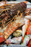 Cattura fresca dei pesci Fotografia Stock