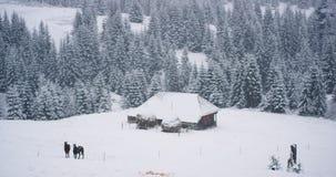 Catturando il video sulla campagna in mezzo alla montagna e casa di legno ed ai cavalli della foresta nevosa alla bella sia intor video d archivio