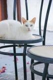 Catty na siedzeniu Zdjęcia Stock