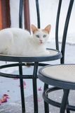 Catty on the seat. In Santorini island, Greece Stock Photos