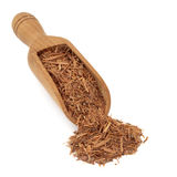 Catuaba Bark Herb. Catuaba bark brazillian herbal medicine in a wooden scoop over white background. Used in alternative medicine as an aphrodisiac stock photos