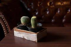 2 Catus на деревянной таблице Стоковое Изображение RF