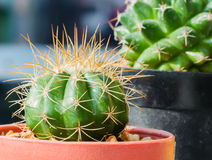 Catus Photos stock