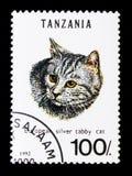 Catus d'argento di silvestris di Tabby Felis, serie dei gatti, circa 1992 Fotografia Stock Libera da Diritti