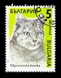 Catus domestico europeo di silvestris di Cat Felis, serie dei gatti, circa 1989 Immagini Stock Libere da Diritti