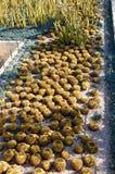 Catus garden Royalty Free Stock Photos