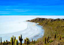 Catus plants island, Salt Desert, Uyuni, Bolivia. Details of the hilly and rocky Fish Island in the middle of Bolivian Salt Flats Stock Photography