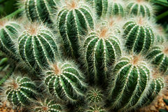 Catus plants in sand Stock Photography
