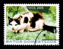 Catus silvestris кошки домашней кошки скрывается, serie, около 2005 Стоковая Фотография