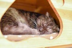 Catus silvestris кошки спать стоковое изображение rf