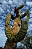 Catuscactussen in de Woestijn van Arizona met Blauwe Hemel en Wolken stock foto
