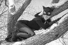 Catwoman Stock Photography