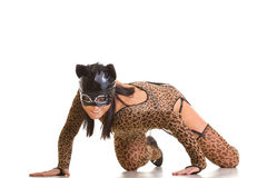 Catwoman posing. Young sexy woman in cat costume and mask posing on the studio floor Stock Photography