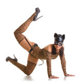 Catwoman posing. Young sexy woman in cat costume and mask posing on the studio floor Stock Images
