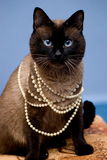 Catyys Royalty Free Stock Image