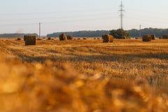 Caução do feno que colhe na paisagem dourada do campo Fotografia de Stock