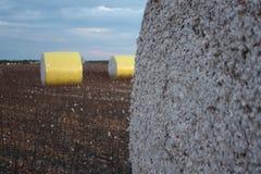 Cauções do algodão Fotografia de Stock
