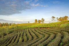 Cau Dat by, Da-Latstad, Lam Dong landskap, Vietnam Royaltyfria Foton