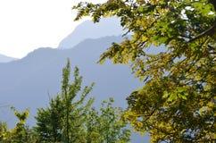 Caucase a mélangé des forêts dans la réservation naturelle d'Ilisu, Azerbaïdjan du nord-ouest image stock