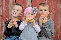 Caucasian barn som äter äpplen Royaltyfri Foto