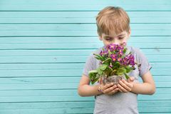 Caucasian boy the teenager against the background of a blue wall from old boards with a bouquet of seedling of c royalty free stock photography